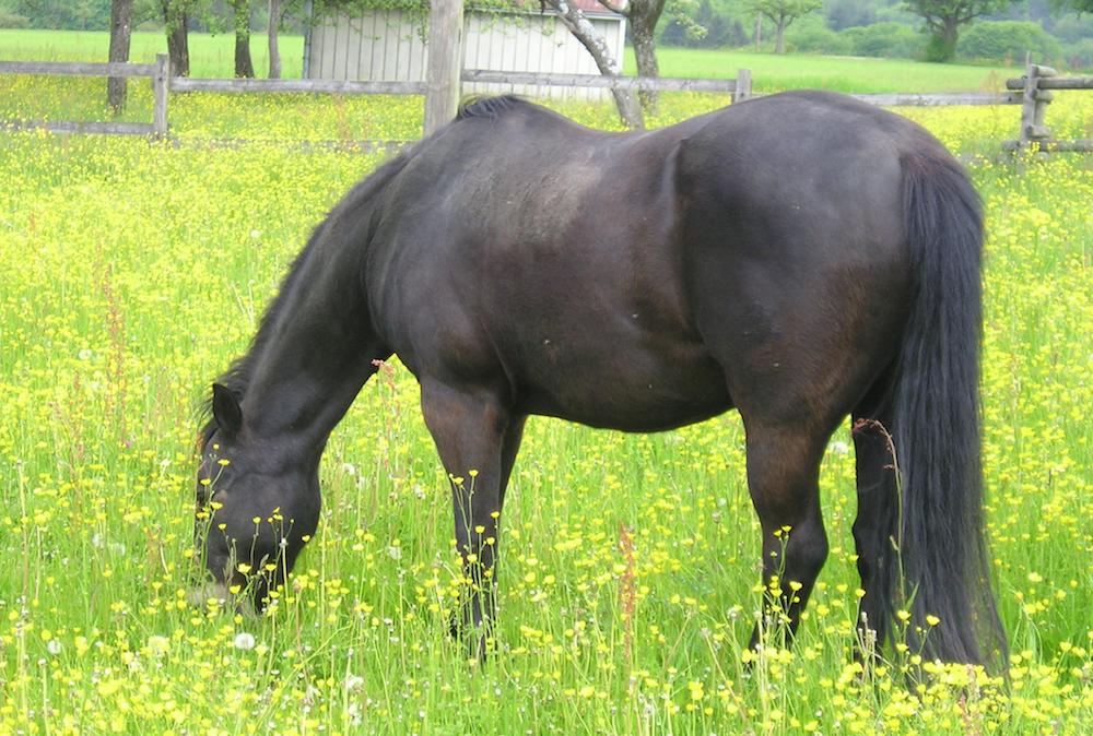 pferd-P5130416-2